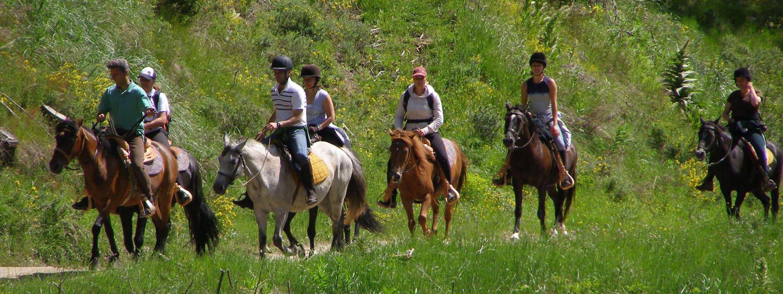 horselong-min